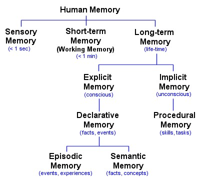 ?the difference between short-term and long-term memory essay Short-term (working) memory long-term memory semantic memory this difference in the neurological processing of episodic and semantic memory.