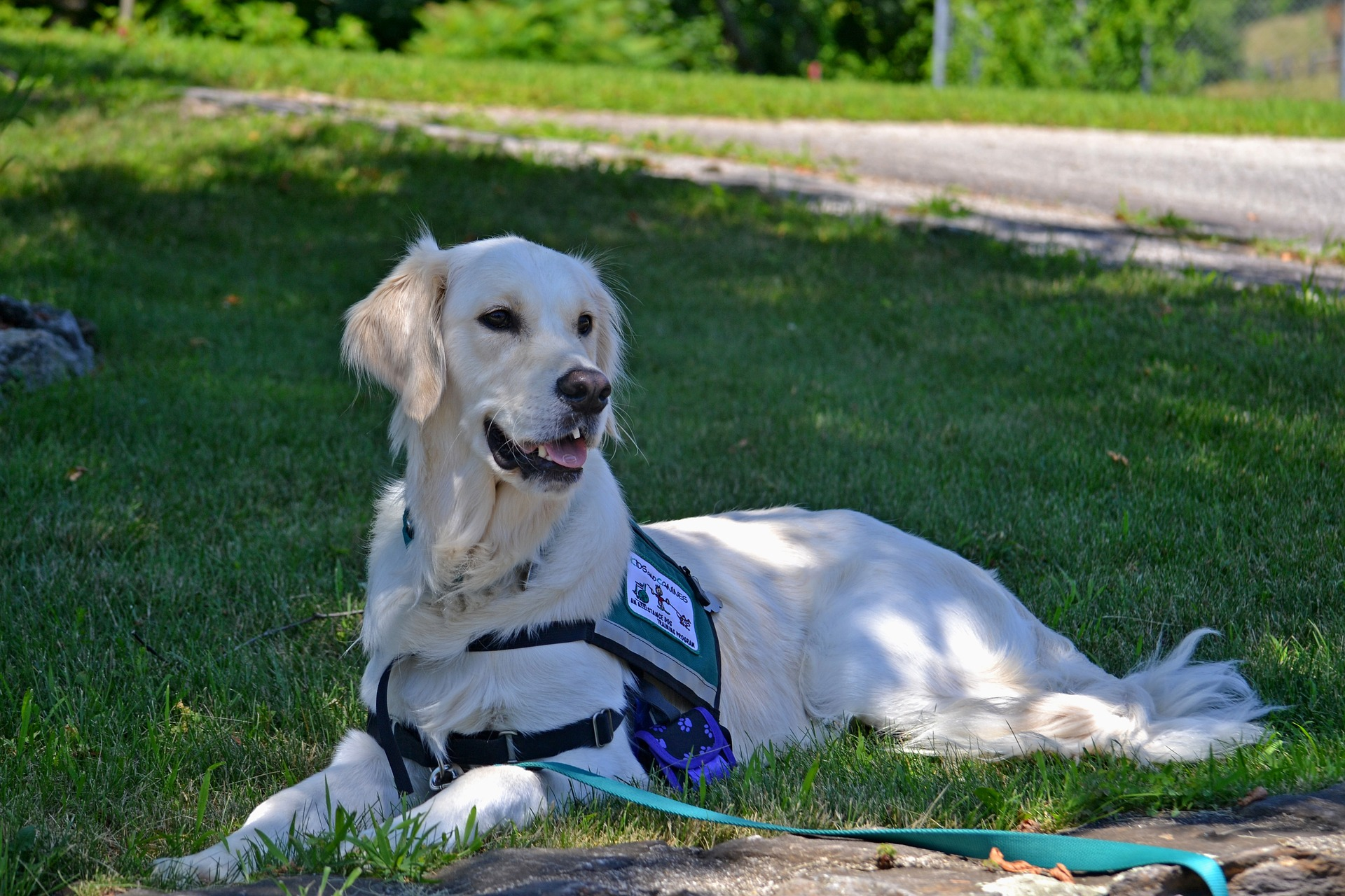 Service Dogs Play an Important Role Whether or Not Society Is