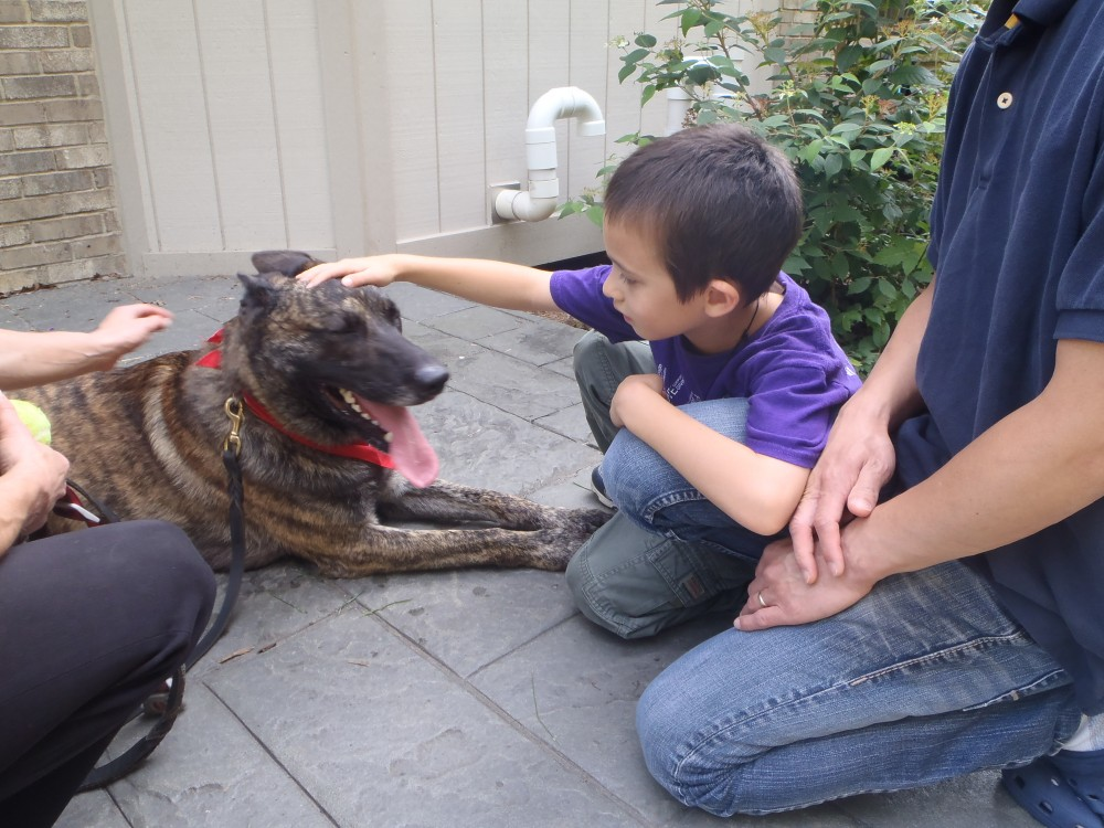 Therapy Dog Home Visits